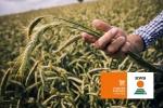 Компания КВС РУС запускает свой собственный B2B онлайн-магазин семян для сельхозпроизводителей